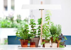 نور مورد نیاز برای گیاهان
