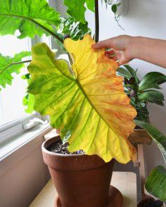 عناصر موثر در رشد گیاهان