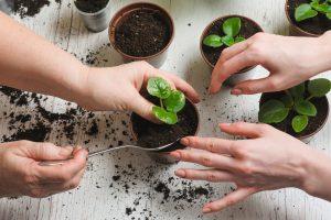 خاک لازم برای گیاهان