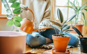 آبیاری لازم برای گیاهان